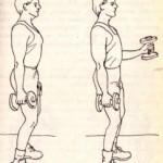 Упражнение №20. Мышцы плеча и предплечья
