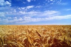Сельхоз компания